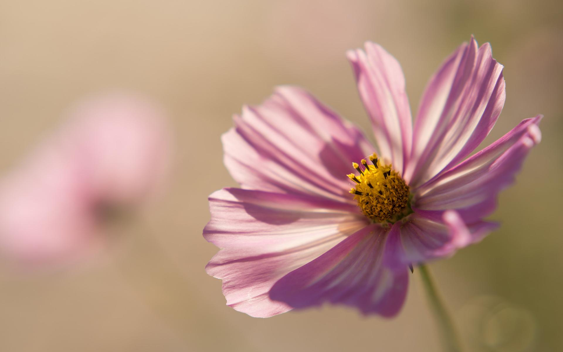 Cosmos wallpapers HD quality