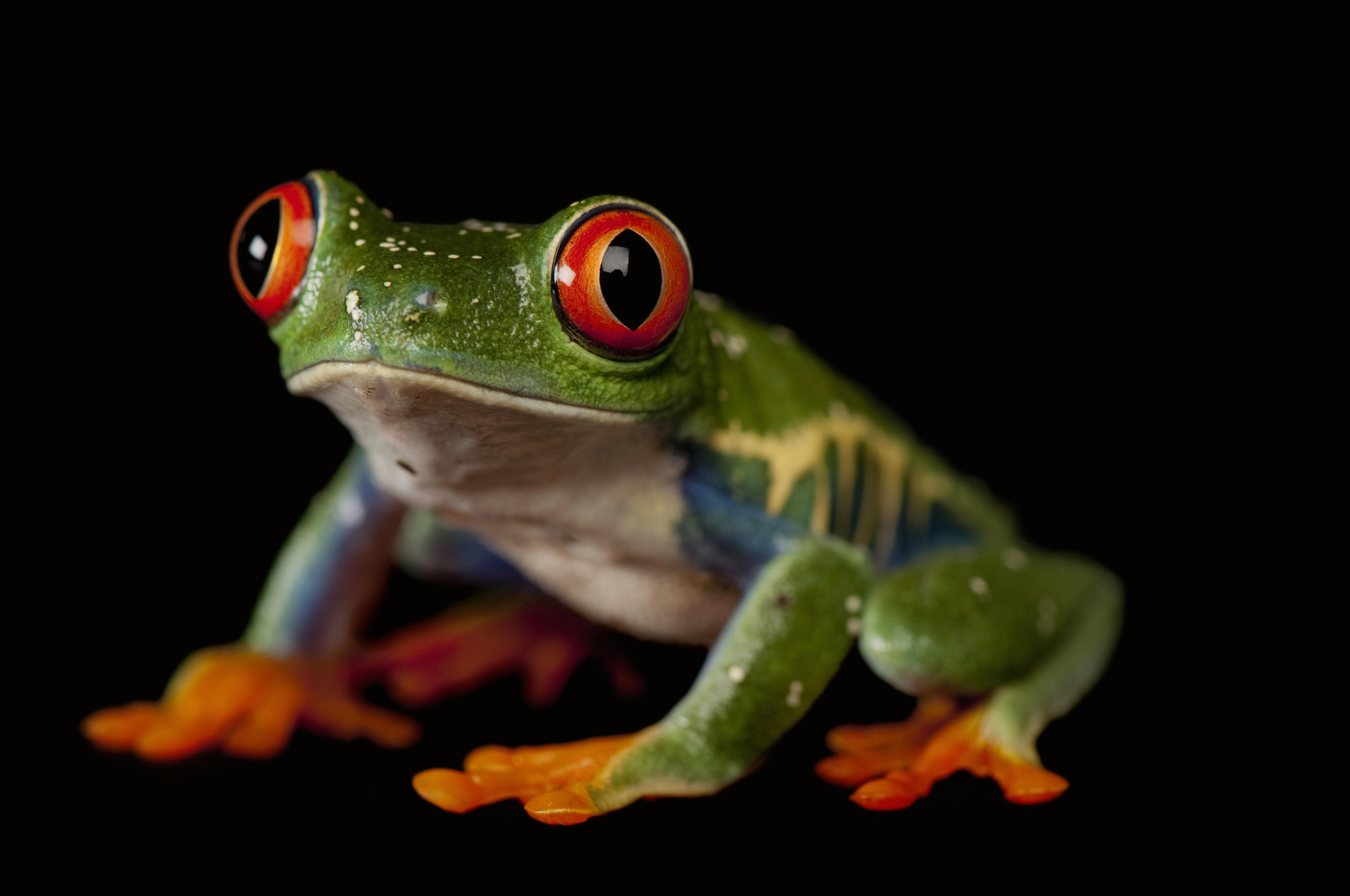 Frog wallpapers HD quality