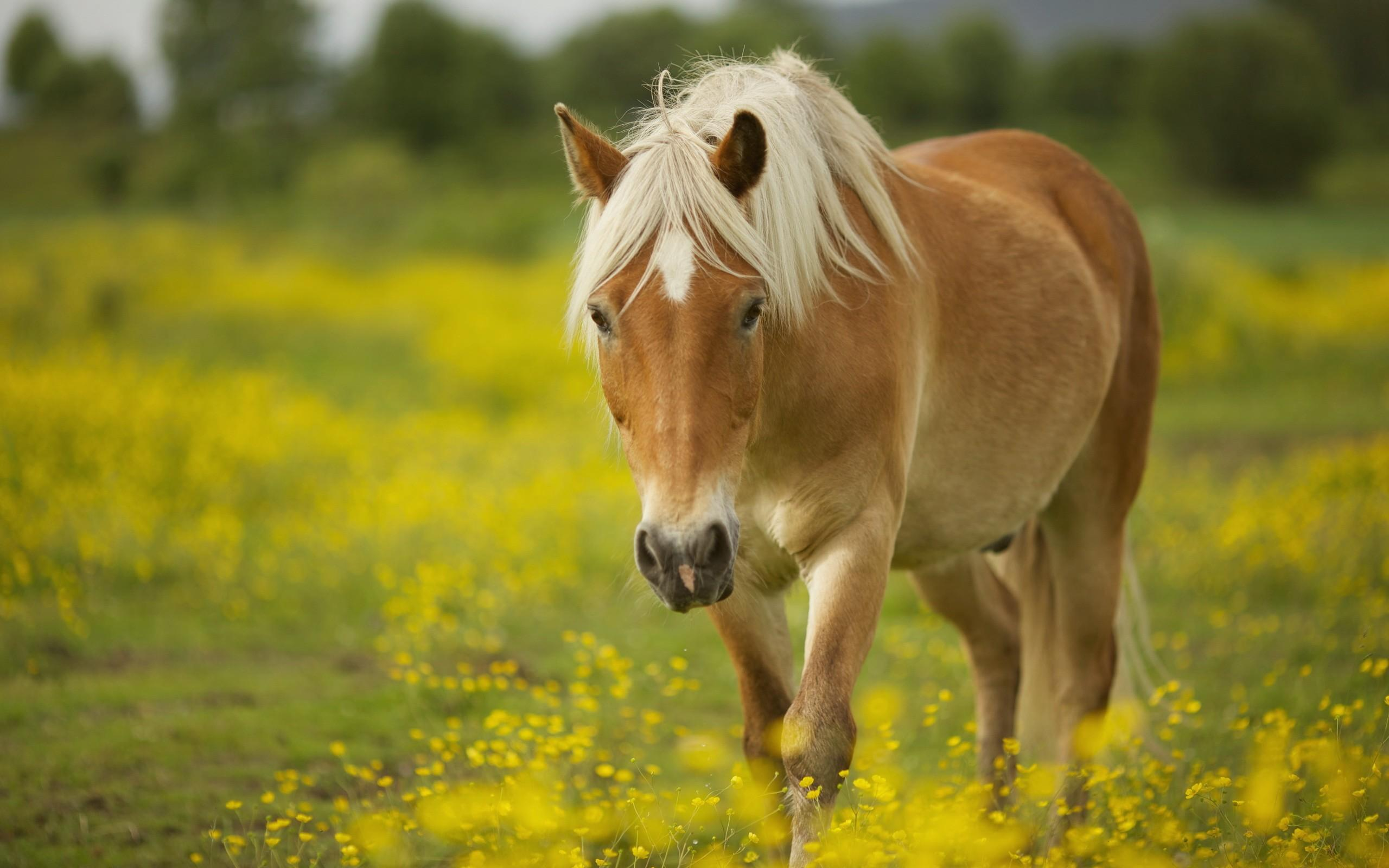 Horse wallpapers HD quality