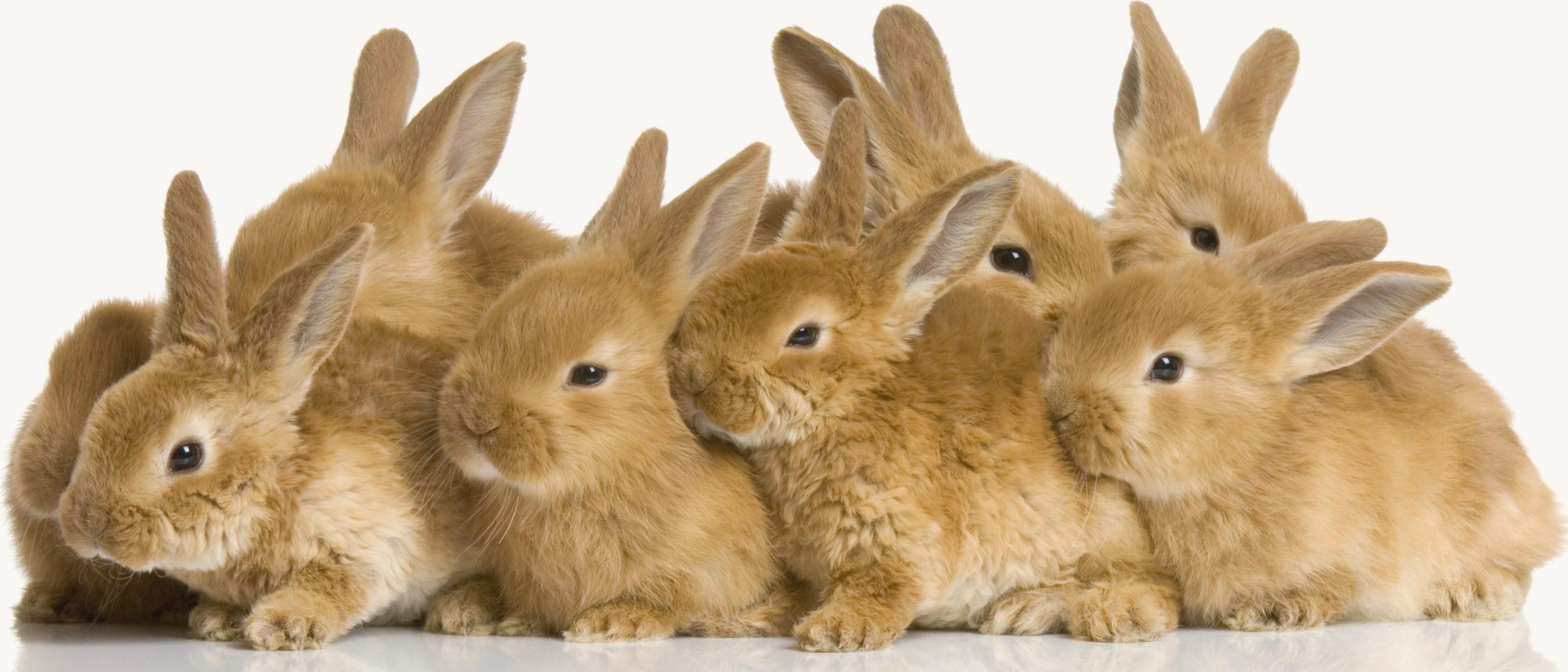 Rabbit wallpapers HD quality