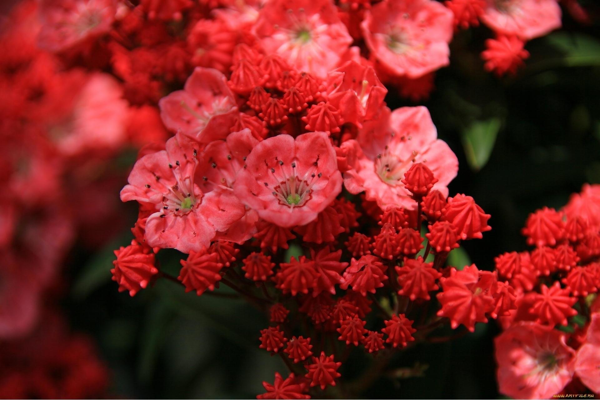природа цветы куст без смс