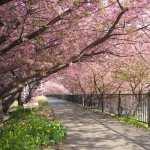 Blossom high definition photo