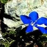 Flowers hd pics