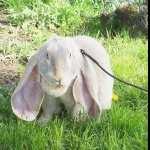 Rabbit hd desktop