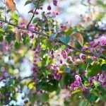 Blossom download wallpaper
