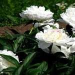 Flowers 1080p