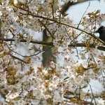 Blossom pics