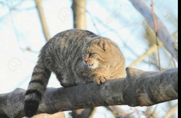 European Wildcat wallpapers hd quality