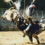 Rodeo hd photos