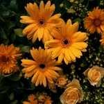 Flower new photos