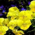 Flowers free