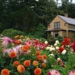 Flower download