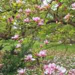 Blossom free download