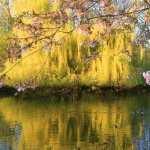 Blossom hd pics