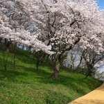 Blossom hd wallpaper