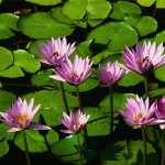 Flower hd pics