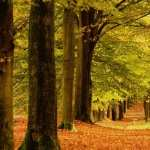 Forest download