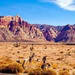 Nevada Day desktop