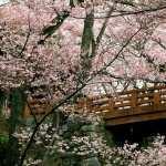 Blossom full hd