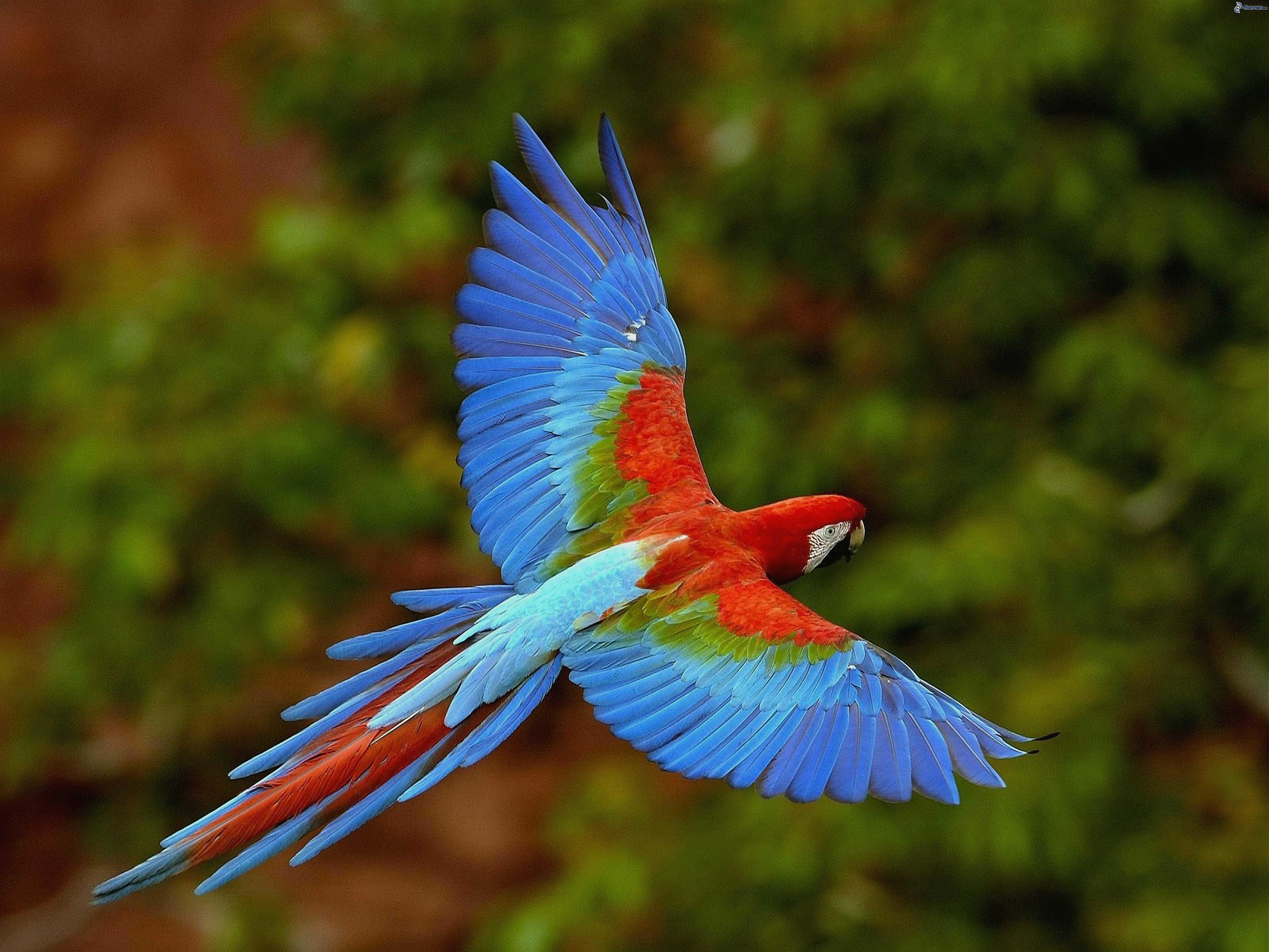 عکس زیباترین طوطی های جهان