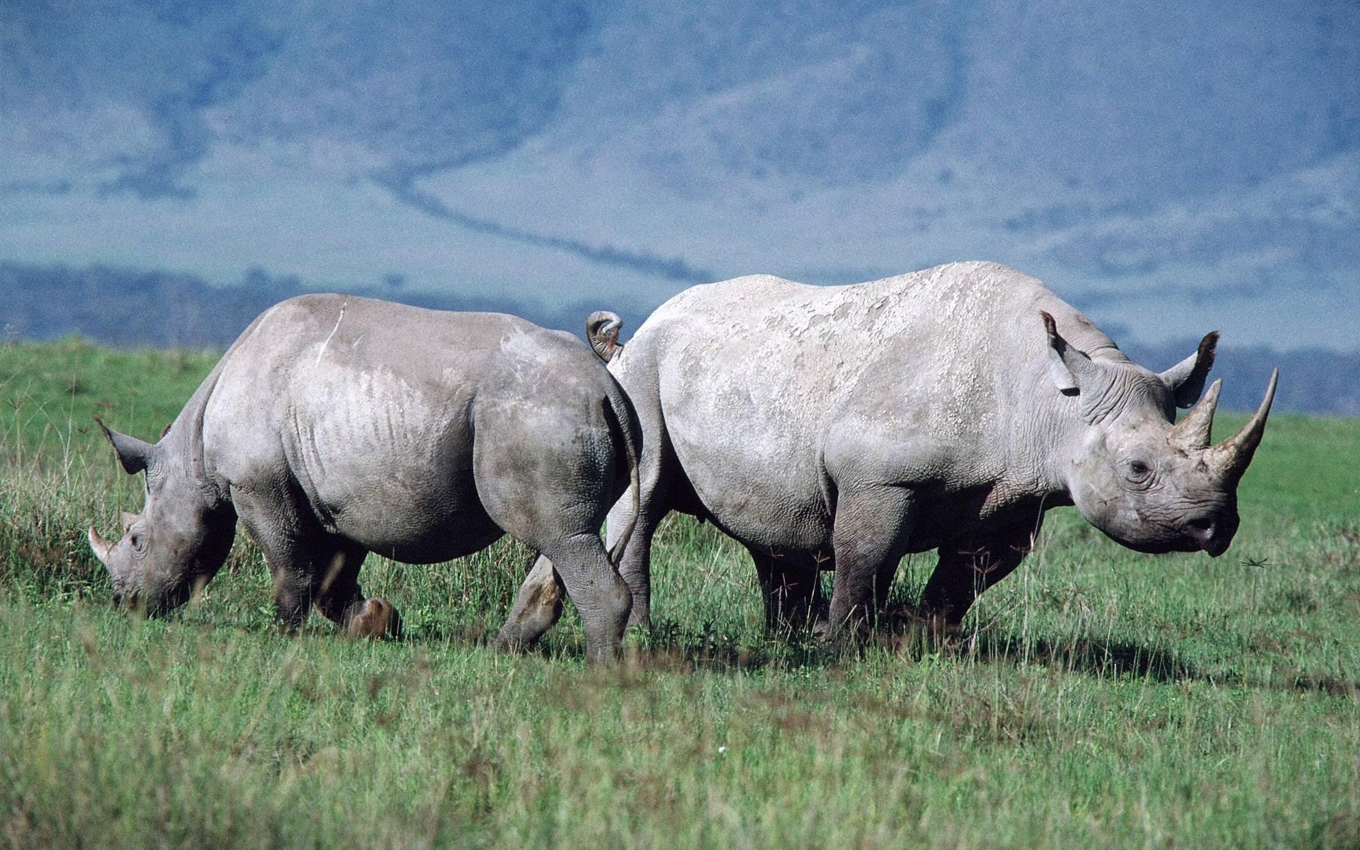 Rhino wallpapers HD quality
