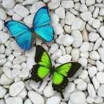 Butterflies hd wallpaper