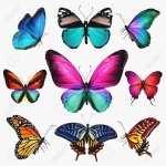Butterflies desktop