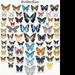 Butterflies high definition photo