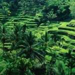 Indonesia hd