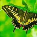 Butterflies new wallpapers