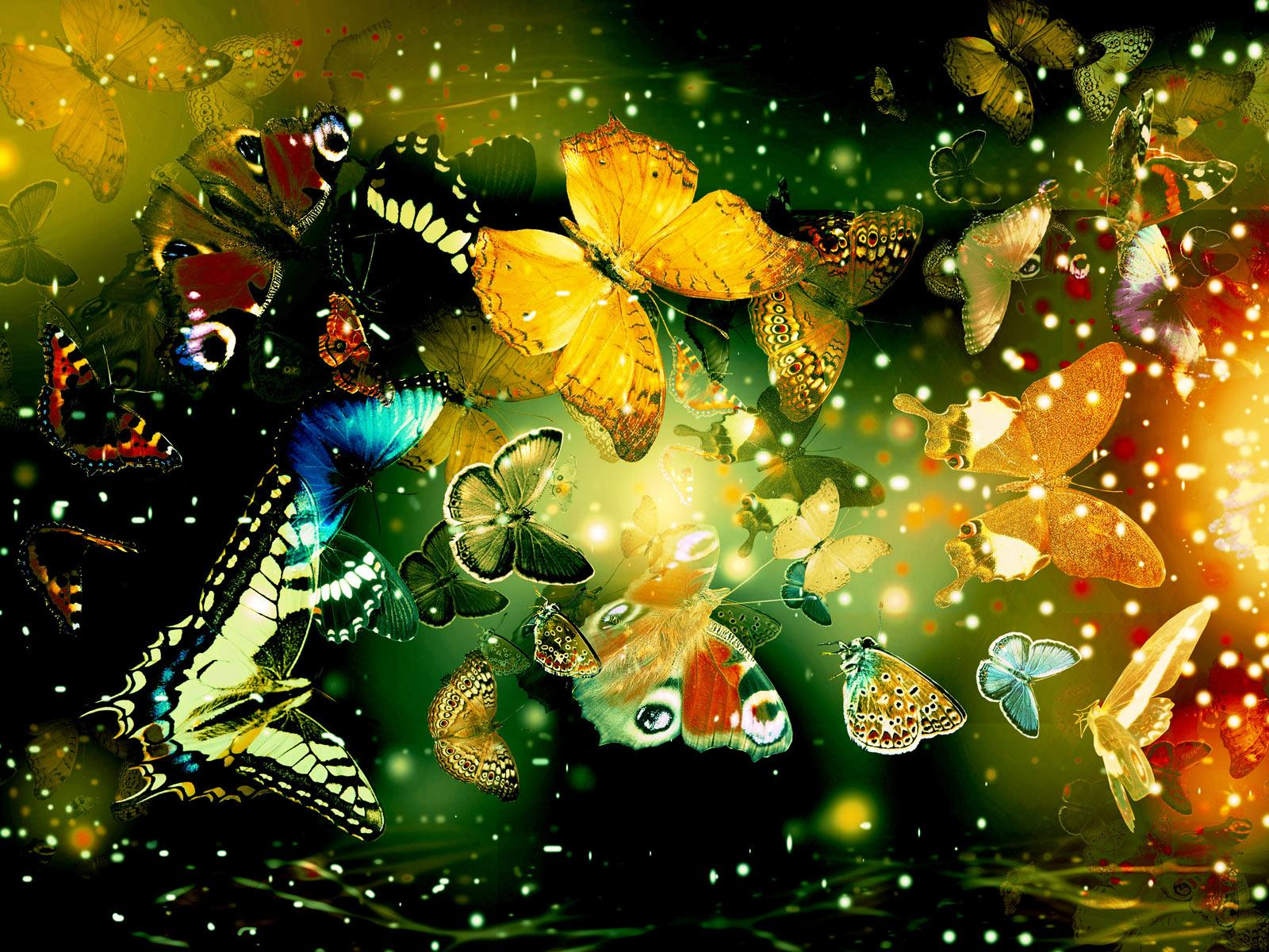 Butterfly Artistic wallpapers HD quality