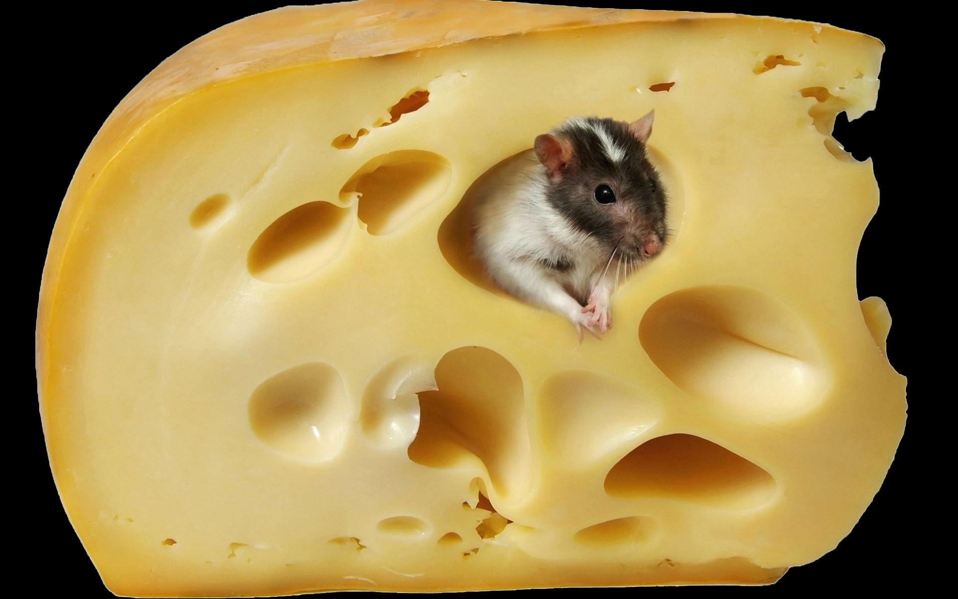Cheese wallpapers HD quality