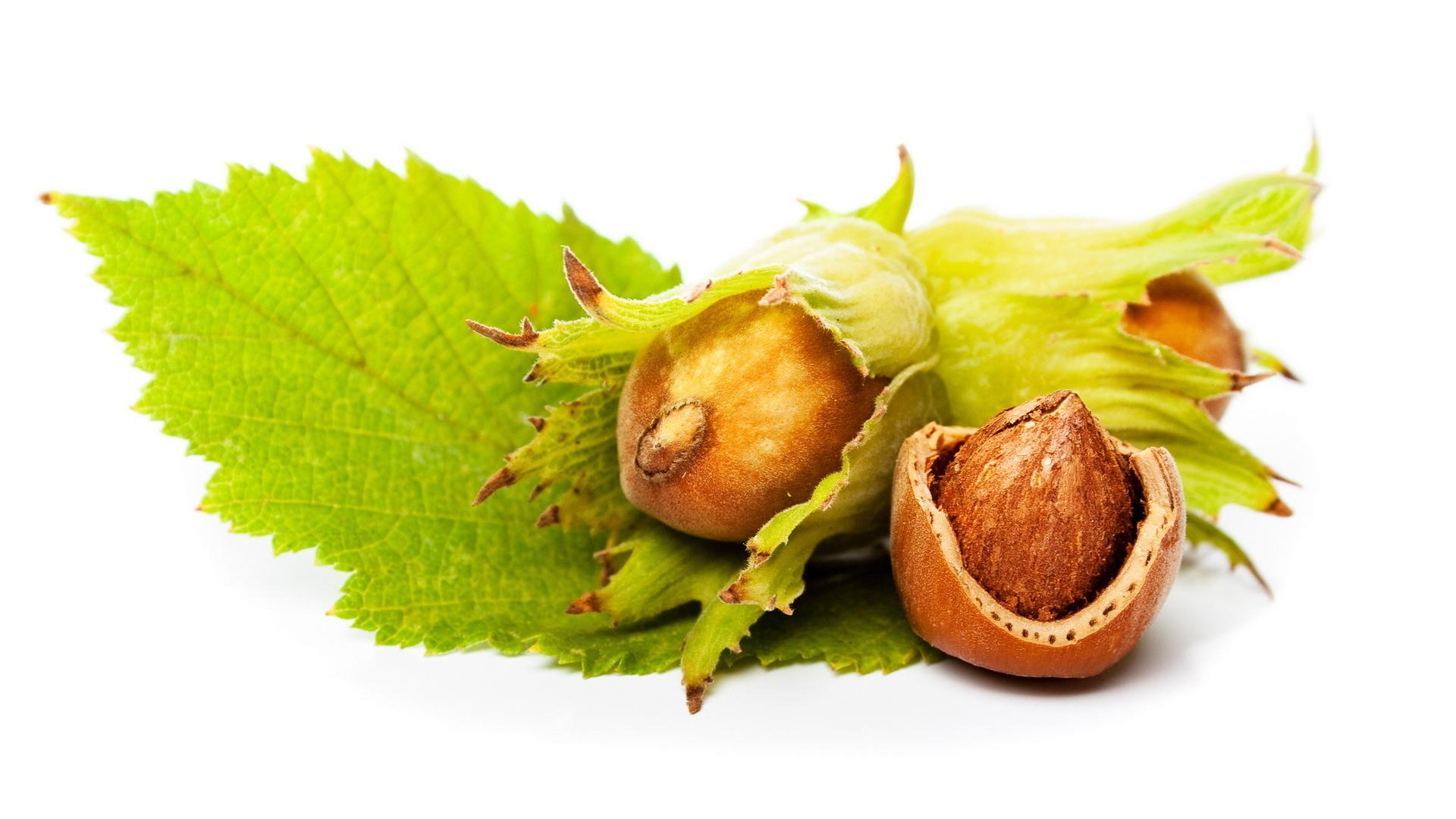 Hazelnut wallpapers HD quality