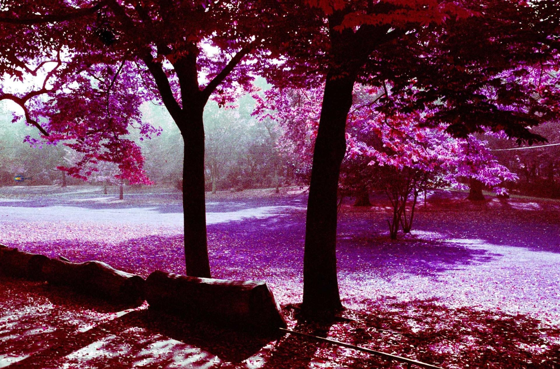 Infrared Photography wallpapers HD quality