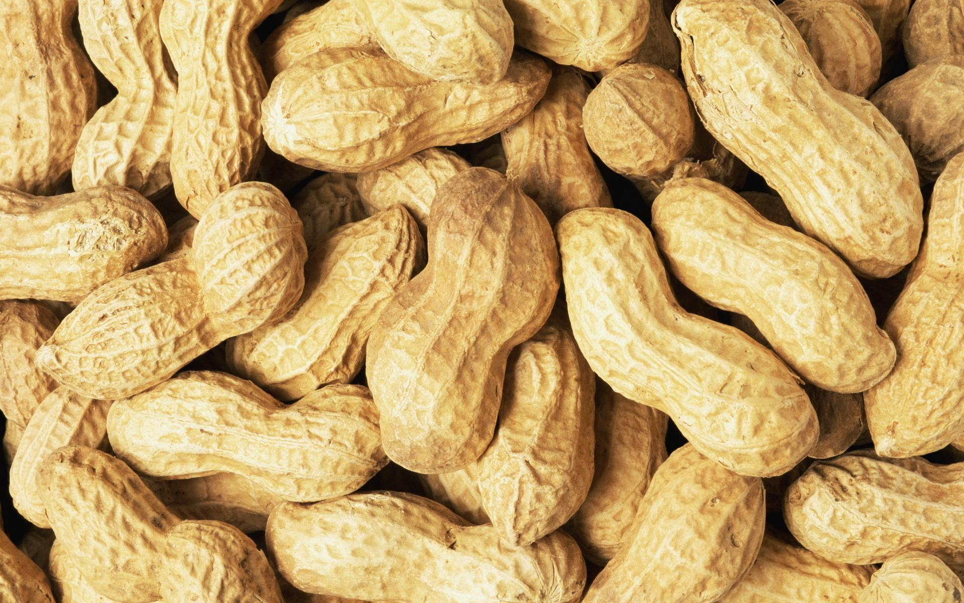 Peanut wallpapers HD quality