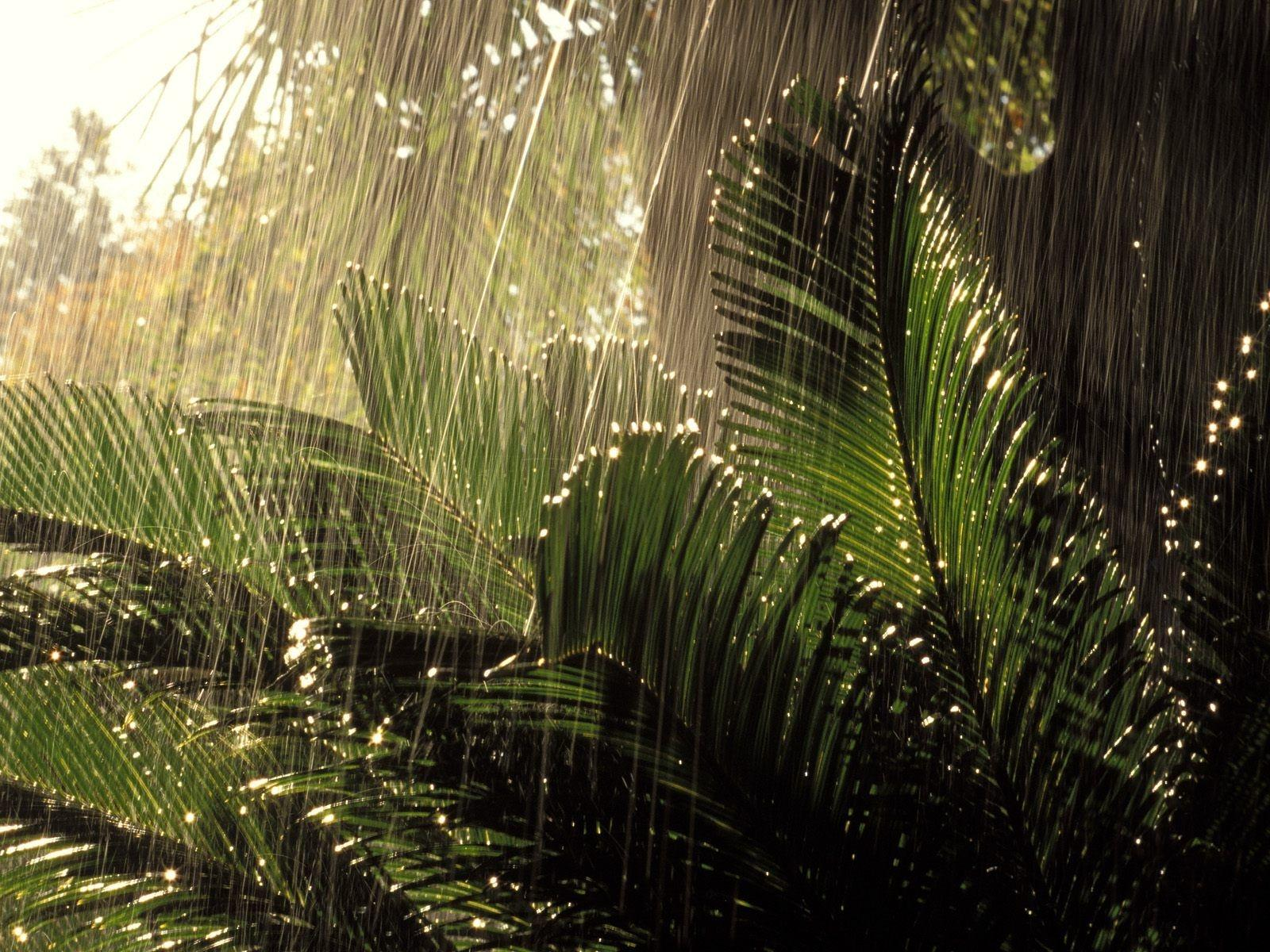 Tropical Photography wallpapers HD quality