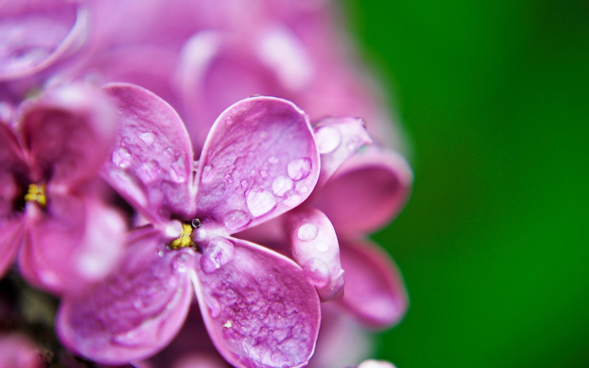 цветок фиолетово-зеленый макро бесплатно