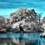 Infrared Photography free download