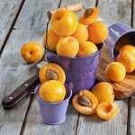 Apricot pic