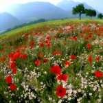 Landscape Artistic pics