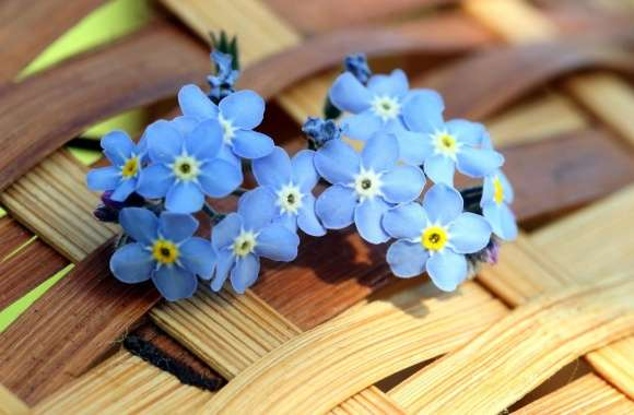 Forget-Me-Not wallpapers hd quality