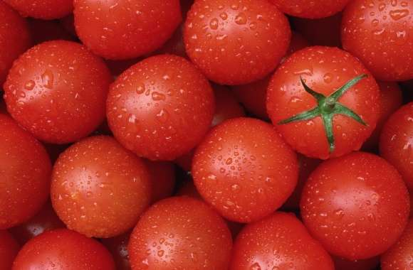 Tomato wallpapers hd quality