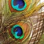 Feather Photography hd photos