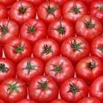 Tomato widescreen