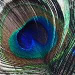 Feather Photography PC wallpapers