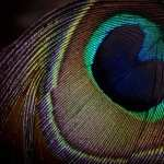 Feather Photography high definition wallpapers