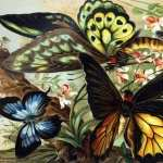 Butterfly Artistic new wallpapers