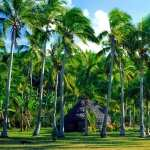 Tropical Photography wallpapers