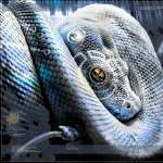 Animal Sci Fi wallpapers for iphone