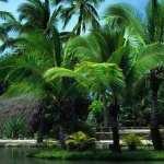Tropical Photography new photos